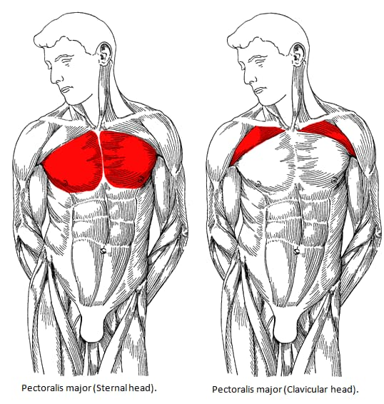 heavy chest workout